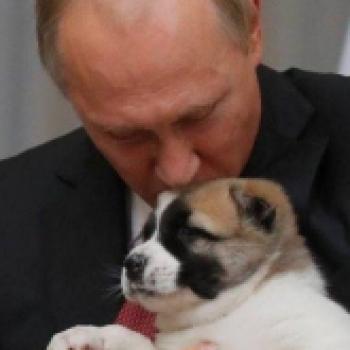cagnolino di Putin