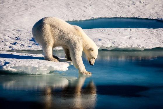 NN IP: cambiamento climatico, ecco come decarbonizzare il portafoglio